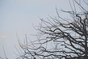 枯れ木と空の写真素材 [FYI04873208]