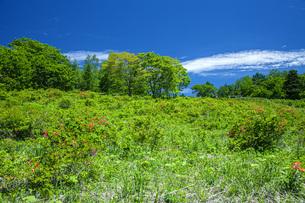 初夏の蔵王坊平高原の写真素材 [FYI04873786]