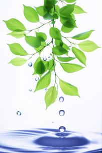 水滴と葉っぱと波紋の写真素材 [FYI04873955]