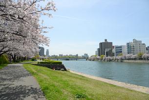 太田川畔の桜並木と広島市街並みの写真素材 [FYI04873982]