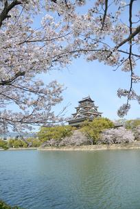 広島城の天守と桜の写真素材 [FYI04873986]
