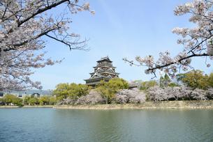 広島城の天守と桜の写真素材 [FYI04873987]