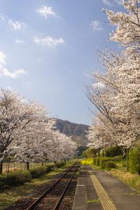 春の長陽駅の写真素材 [FYI04874162]