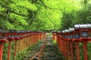 貴船神社 新緑の参道と春日灯籠の写真素材 [FYI04874184]