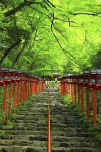 貴船神社 新緑の参道と春日灯籠の写真素材 [FYI04874189]