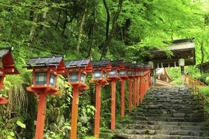 貴船神社 新緑の参道と春日灯籠の写真素材 [FYI04874194]