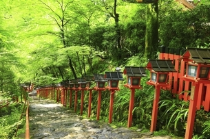 貴船神社 新緑の参道と春日灯籠の写真素材 [FYI04874202]