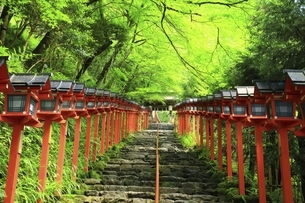 貴船神社 新緑の参道と春日灯籠の写真素材 [FYI04874208]