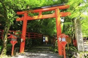新緑と貴船神社入口の鳥居の写真素材 [FYI04874209]