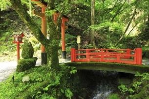 貴船神社 思ひ川橋の写真素材 [FYI04874213]