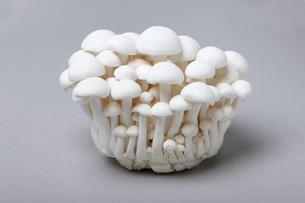 ブナピーシメジ、白ブナシメジ、白クラムシェルマッシュルームとも呼ばれます の写真素材 [FYI04874224]