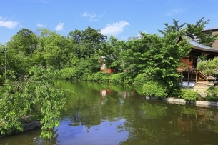 新緑の神泉苑の写真素材 [FYI04874241]