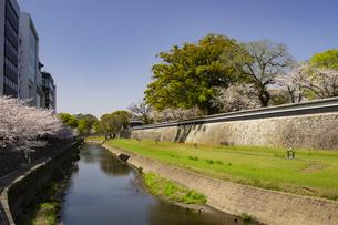 熊本城長塀の桜の写真素材 [FYI04874316]