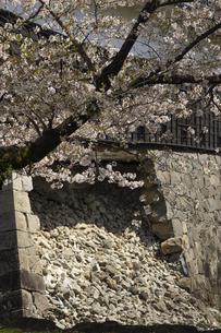 春の熊本城の写真素材 [FYI04874318]