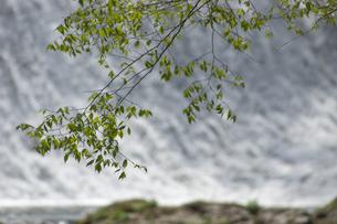 新緑の菊池渓谷の写真素材 [FYI04874321]