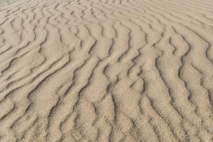 砂丘の風紋の写真素材 [FYI04874556]