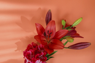 オレンジ色の壁背景の百合とイロマツヨイグサの写真素材 [FYI04874605]