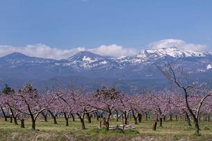 桃畑と吾妻連峰の写真素材 [FYI04874636]