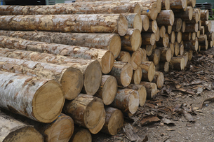 材木の写真素材 [FYI04875102]