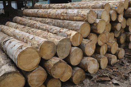 材木の写真素材 [FYI04875103]