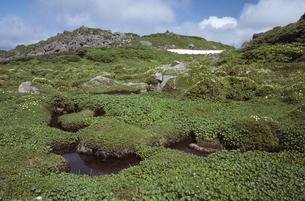 トムラウシ山付近の花畑(北海道・大雪山)の写真素材 [FYI04875139]