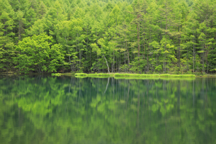 初夏の御射鹿池の写真素材 [FYI04875202]