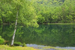 初夏の御射鹿池の写真素材 [FYI04875204]