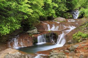 初夏のおしどり隠しの滝の写真素材 [FYI04875205]