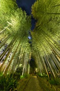 修善寺温泉 新緑に囲まれ月夜にライトアップされた竹林の小径(円形ベンチ広場から西側への風景)の写真素材 [FYI04875312]