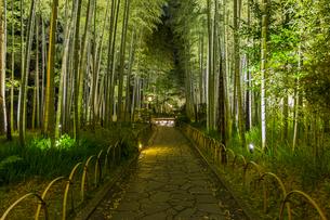 修善寺温泉 新緑に囲まれライトアップされた竹林の小径(西側から東側への風景)の写真素材 [FYI04875314]