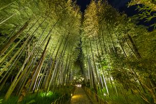修善寺温泉 新緑に囲まれライトアップされた竹林の小径(西側から東側への風景)の写真素材 [FYI04875319]