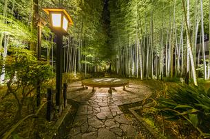 修善寺温泉 新緑に囲まれライトアップされた竹林の小径と切り絵アートが投影された円形ベンチ(円形ベンチ広場から東側への風景)の写真素材 [FYI04875324]