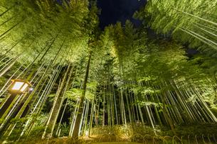 修善寺温泉 新緑に囲まれライトアップされた竹林の小径(桂川側への風景)の写真素材 [FYI04875341]