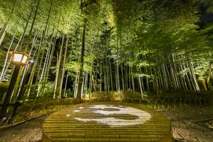 修善寺温泉 新緑に囲まれライトアップされた竹林の小径と切り絵アートが投影された円形ベンチ(桂川側への風景)の写真素材 [FYI04875342]
