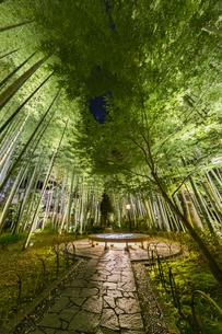 修善寺温泉 新緑に囲まれライトアップされた竹林の小径と円形ベンチ(東側から西側への風景)の写真素材 [FYI04875350]