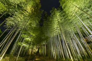 修善寺温泉 新緑に囲まれライトアップされた竹林の小径(円形ベンチ広場から東側への風景)の写真素材 [FYI04875351]