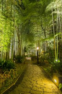 修善寺温泉 新緑に囲まれライトアップされた竹林の小径(東側から西側への風景)の写真素材 [FYI04875352]