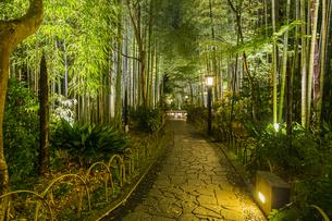 修善寺温泉 新緑に囲まれライトアップされた竹林の小径(東側から西側への風景)の写真素材 [FYI04875355]