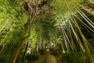 修善寺温泉 新緑に囲まれライトアップされた竹林の小径(東側から西側への風景)の写真素材 [FYI04875357]