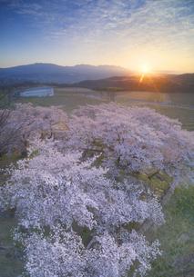 一本木公園の桜と椀子ワイナリーと朝日と浅間山の写真素材 [FYI04875437]