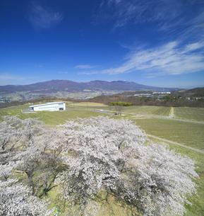 一本木公園の桜と椀子ワイナリーと浅間山の写真素材 [FYI04875439]