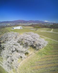 一本木公園の桜と椀子ワイナリーと浅間山の写真素材 [FYI04875440]
