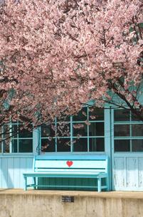 八木沢駅と桜とハートのベンチの写真素材 [FYI04875446]