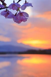 桜と朝焼けと舌喰池の写真素材 [FYI04875451]