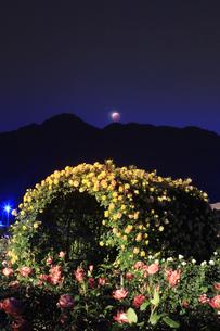 バラ(サハラ'98)のアーチと皆既月食の写真素材 [FYI04875498]
