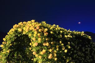 バラ(サハラ'98)のアーチと皆既月食の写真素材 [FYI04875499]