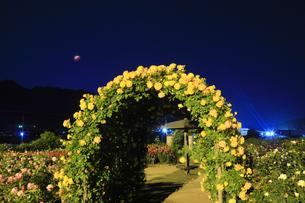 バラ(サハラ'98)のアーチと皆既月食の写真素材 [FYI04875502]