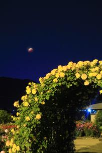 バラ(サハラ'98)のアーチと皆既月食の写真素材 [FYI04875505]
