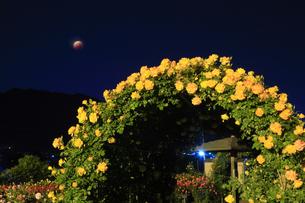 バラ(サハラ'98)のアーチと皆既月食の写真素材 [FYI04875506]