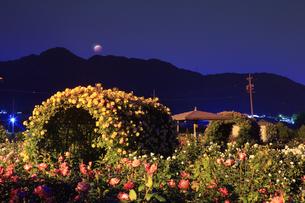 バラ(サハラ'98)のアーチと皆既月食の写真素材 [FYI04875507]